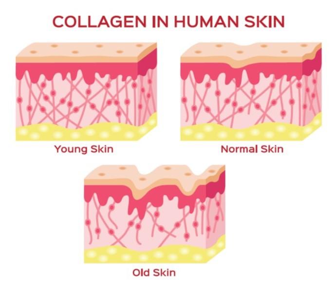 collagen crop